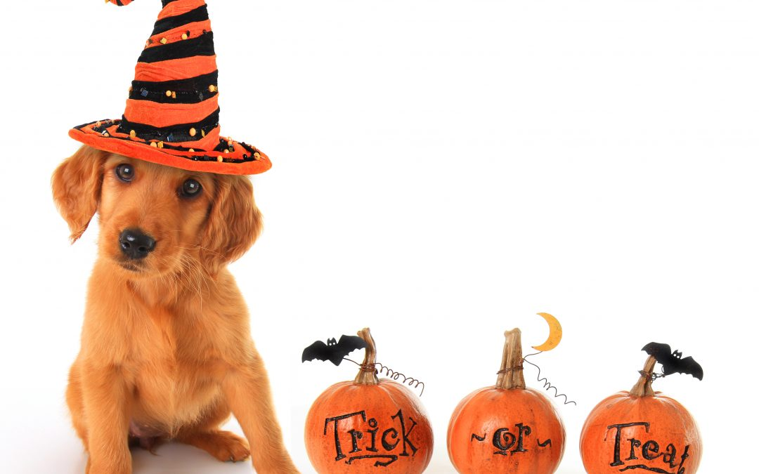 Throw the Perfect Halloween Party For Your Dog in 7 Simple Steps