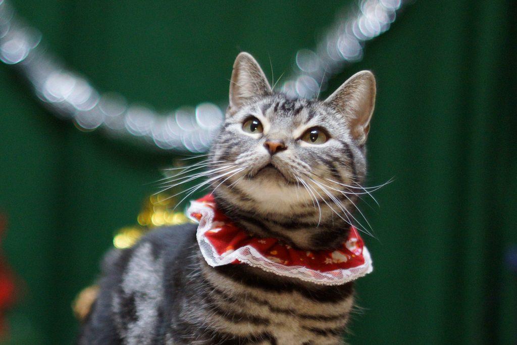 christmas cats 2