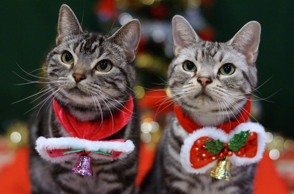 7 Unique Christmas Gifts For Your Cat Under $50