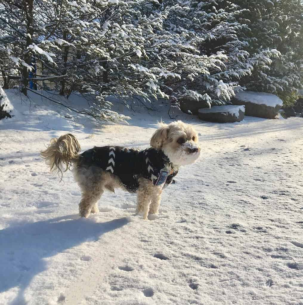 winter safety 2