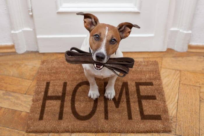 Dog on welcome home mat with leash in mouth ready for a walk
