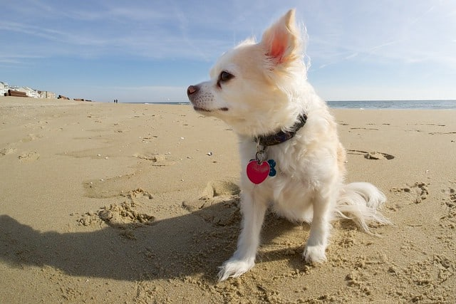 Top 5 Summer Hazards for your Dog