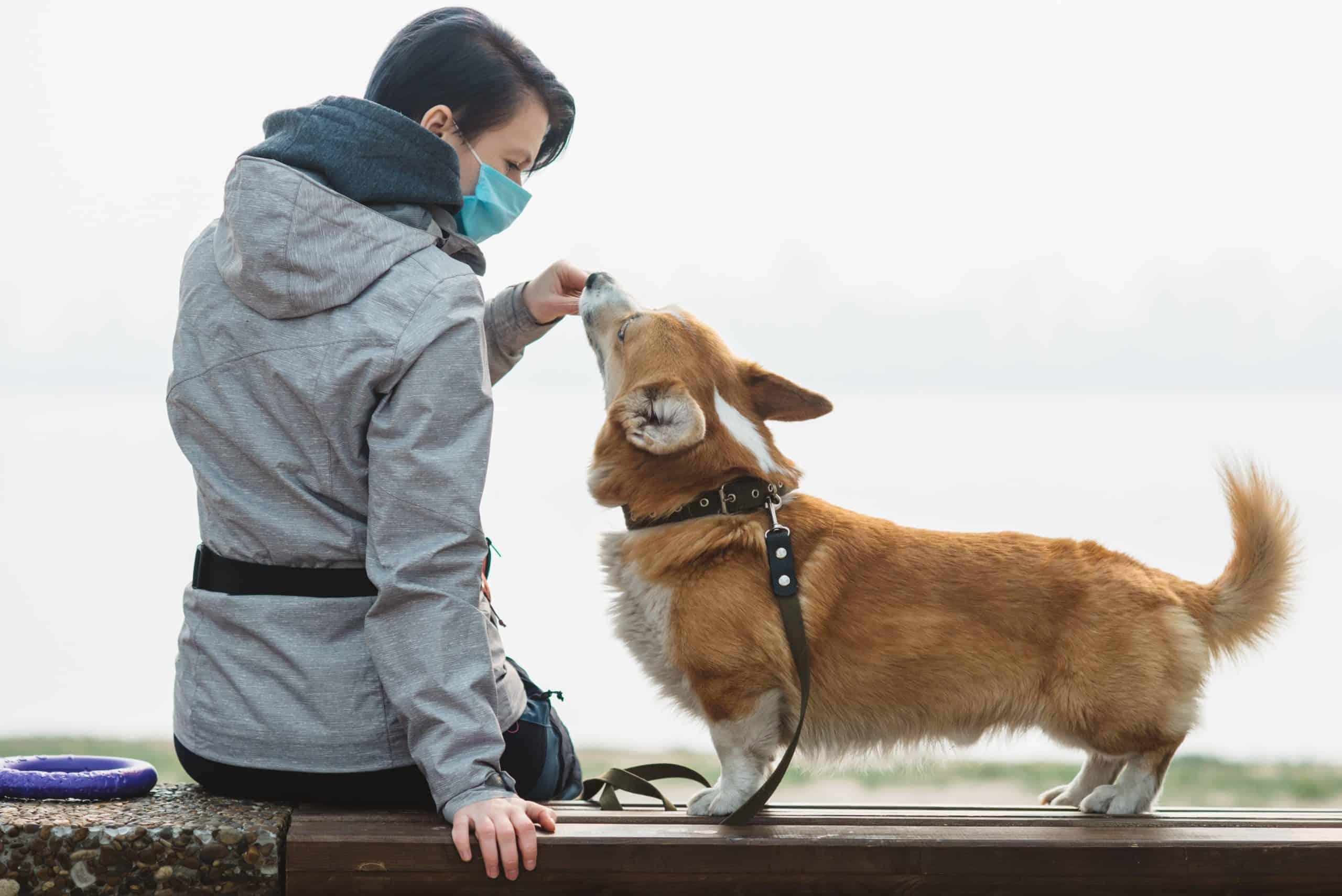 woman in mask feeding her dog a treat